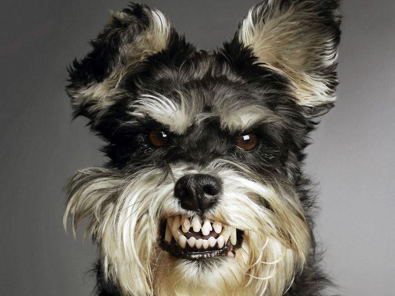tengo miedo a mi perro