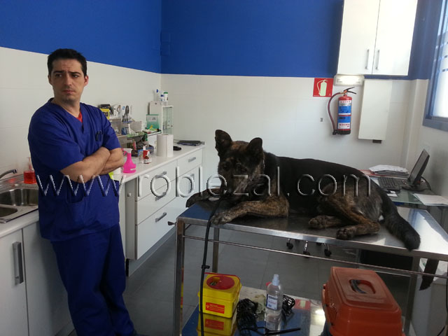 Modificación de conductas, veterinario
