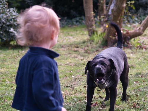 agresividad canina con niños