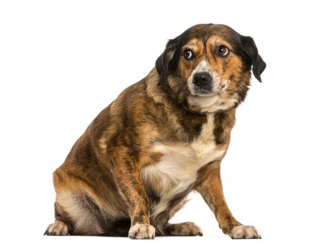 origen de la agresividad canina