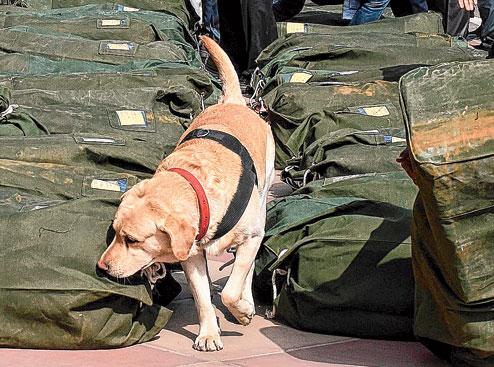 perros detectores de dinero